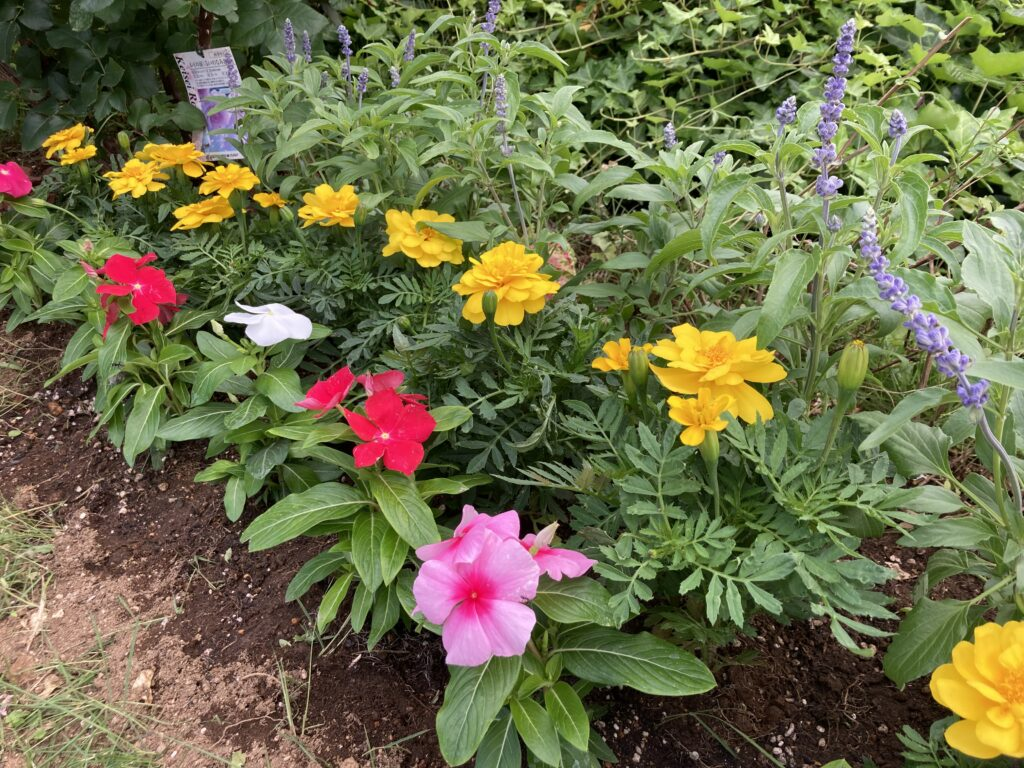 時のともしび 花壇